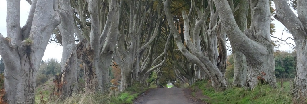 Magical landscape in Northern Ireland