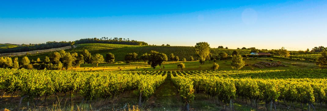 A quick guide to Bordeaux