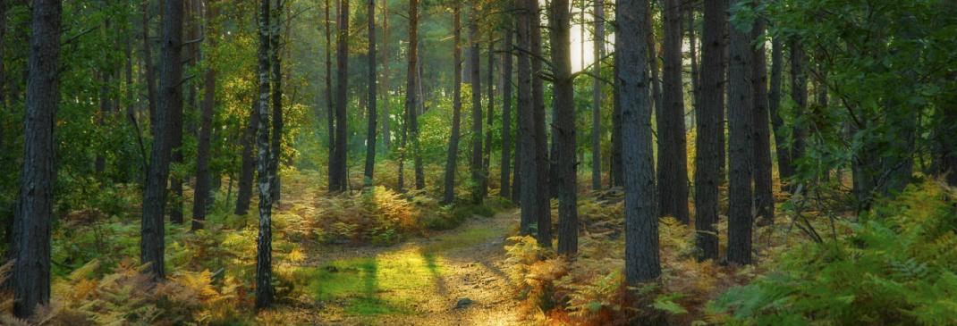 Conduire à Fontainebleau et dans les environs