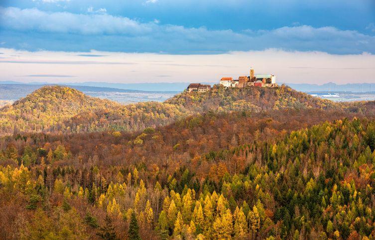 Wald rund um die Wartburg.