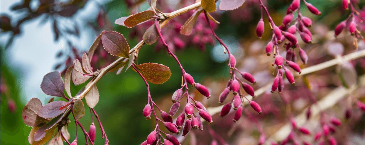 Botanischer Garten Miami Beach