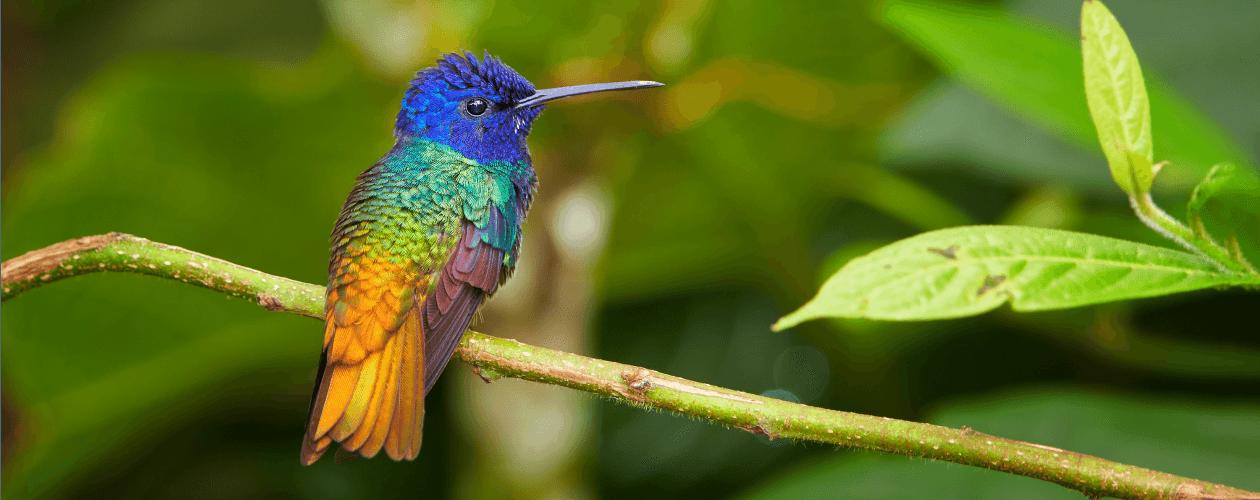 Le Parc des Oiseaux