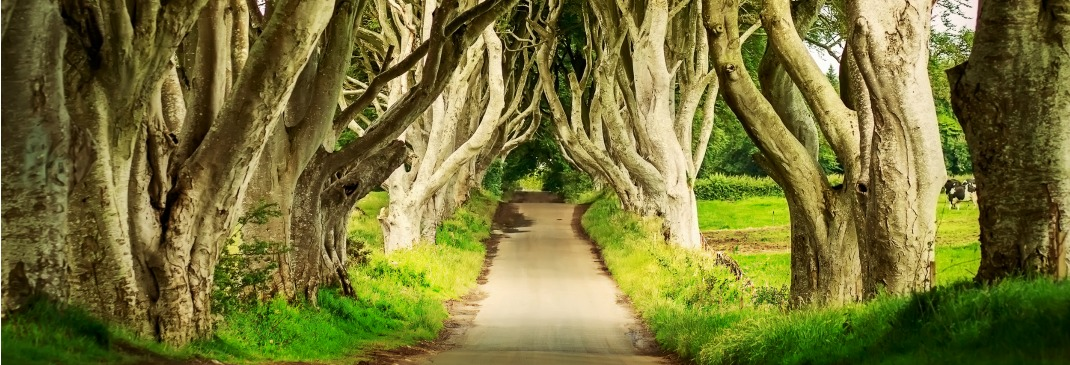 Dark Hedges in Armoy, Northern Ireland.