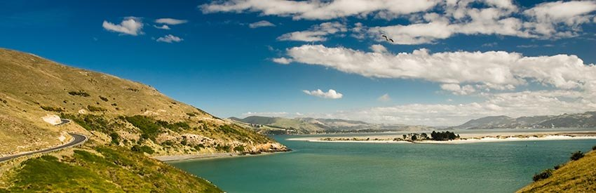 Dunedin Vacation: Natural Beauty Meets Urban Lifestyle banner