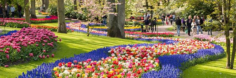 Jardins de Keukenhof - Lisse, Pays-Bas