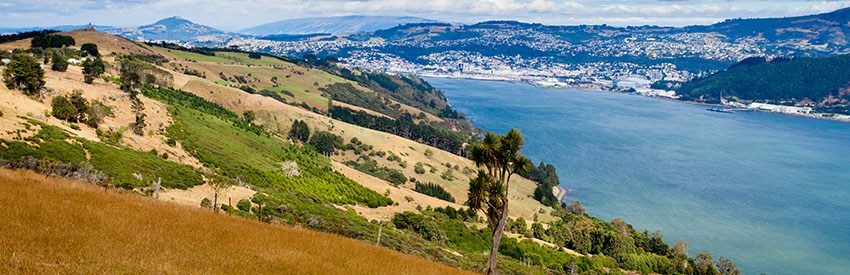 Make The Most Of Dunedin Family Holiday With Dunedin Airport Car Rental banner