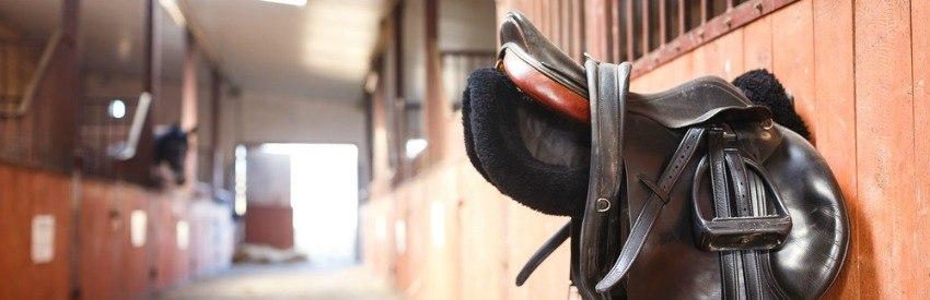 Paarden van wereldklasse komen bijeen in Amsterdam banner