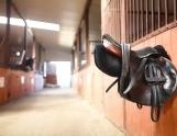Paarden van wereldklasse komen bijeen in Amsterdam