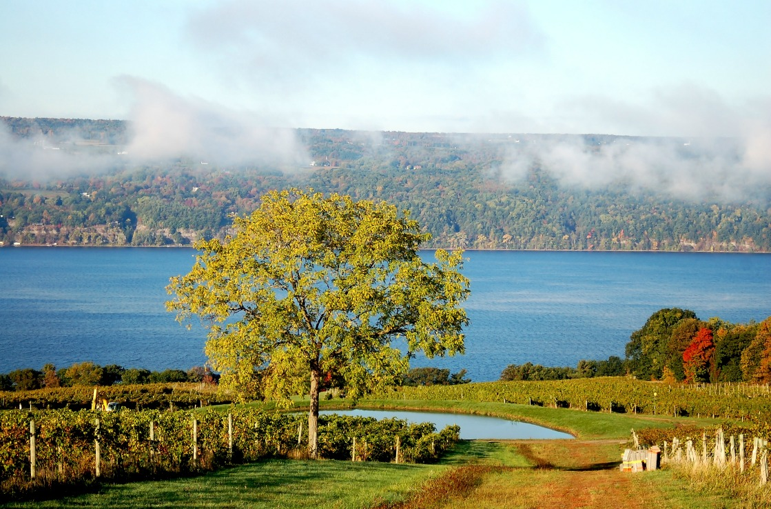Weinanbaugebiet in der Region der Finger Lakes