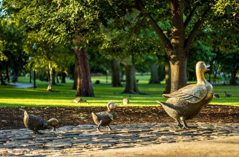 Enten im Stadtpark von Boston