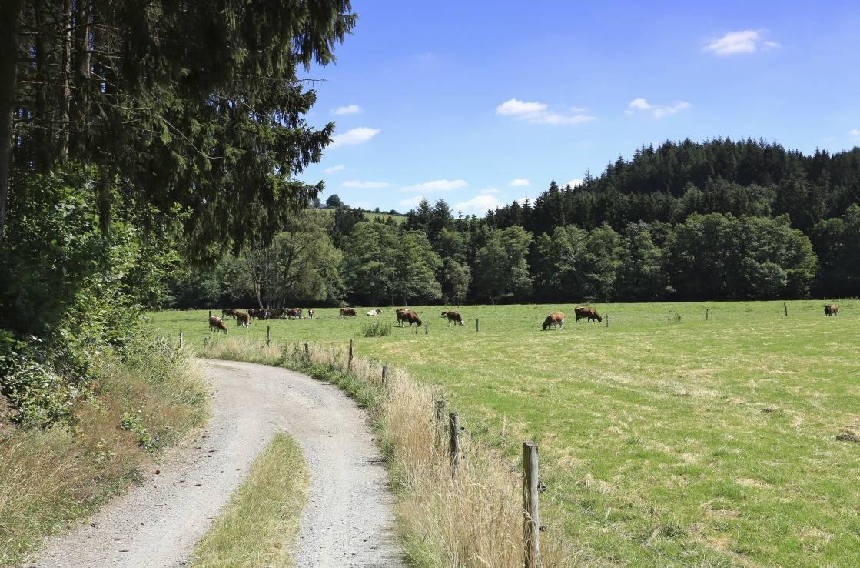 Radweg am Rande der ehemaligen Vennbahn-Strecke.