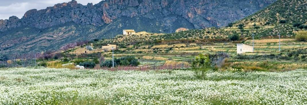 Landschaft um Murcia in Spanien.