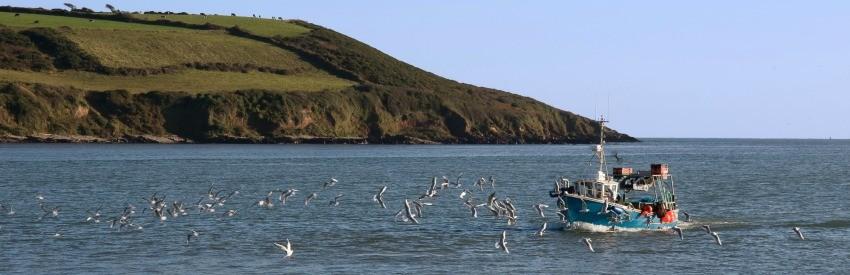 Cork Harbour Festival: Maritimes Flair an der irischen Küste banner