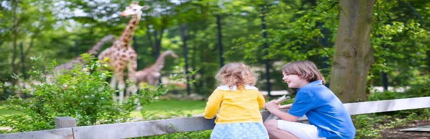 Un giorno in famiglia al parco Le Cornelle  banner