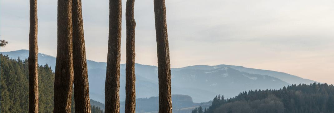 Ein kurzer Leitfaden für Freiburg
