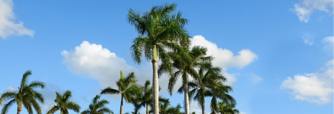 Driving in and around Boca Raton